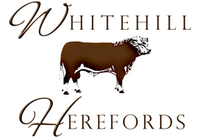 Whitehill Herefords